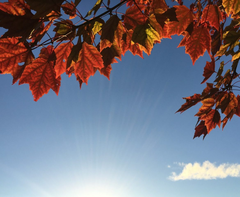 Sunshine In Autumn